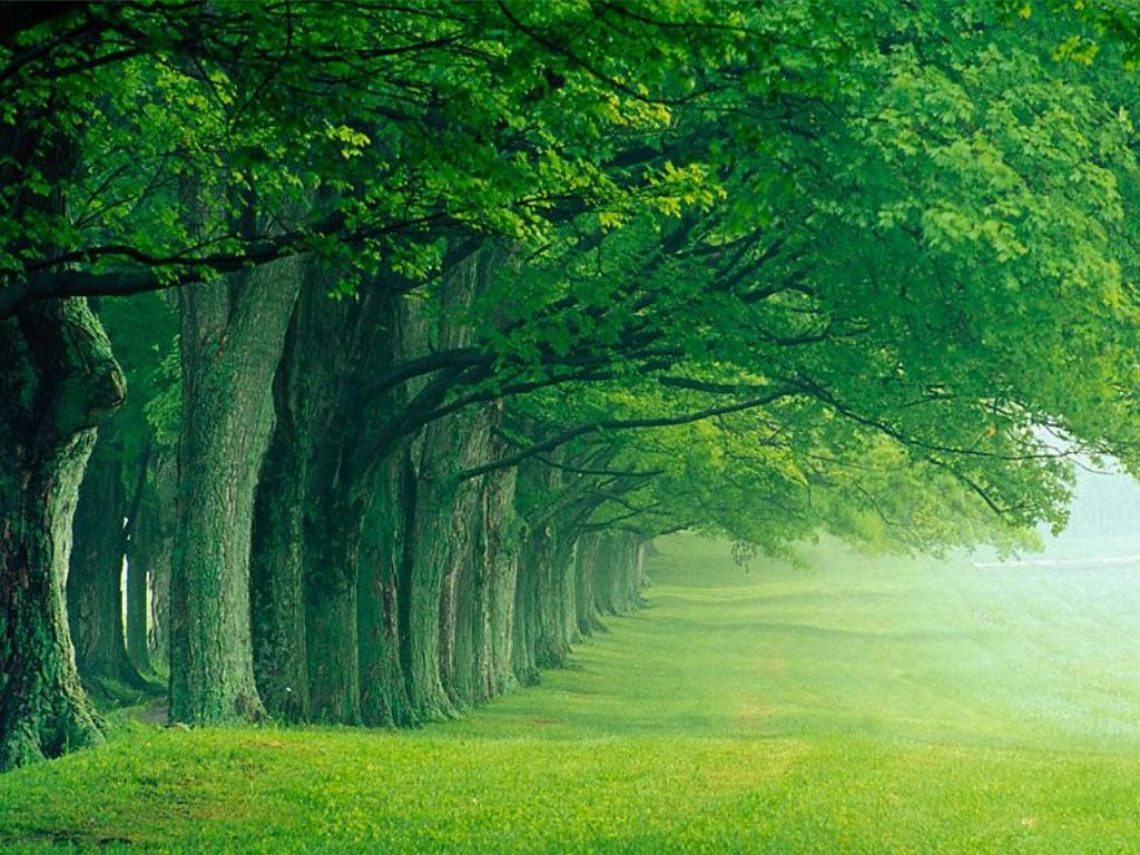 خداوند حضرت آدم -علیه اسلام- و همسرشان را در «باغ» سکونت می دهد.
