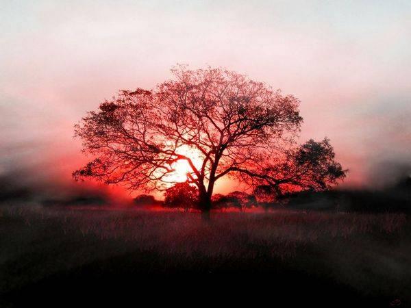 خداوند فرمود به این درخت نزدیک نشوید.